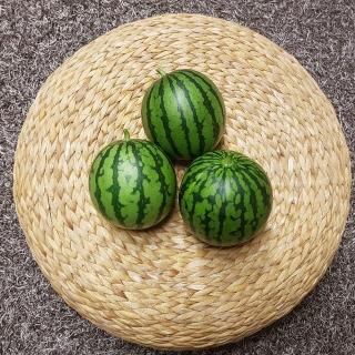[티몬균일가] 정품 당도보장 애플수박 1.3kg내외 2수