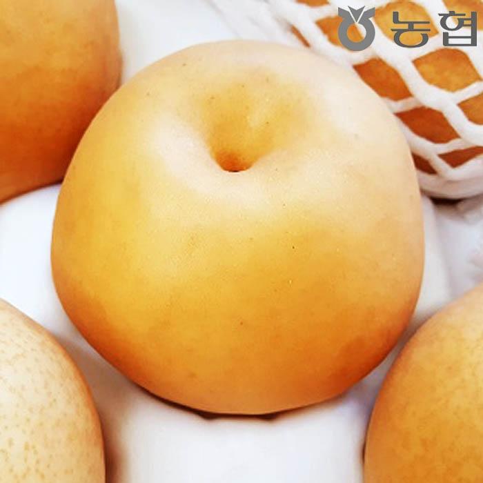 [무한타임] 농협 신토랑 꿀배 5KG 대과/7~11과/실중량 가정용 상품